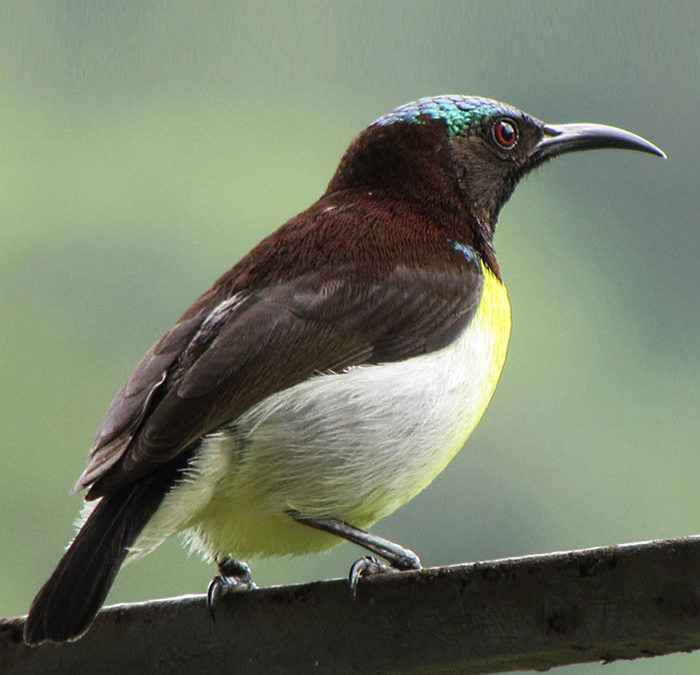 Of Birds, Insects and Interviews